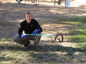 Rattlesnake captured!