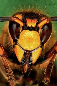 Winning Entry - Yellow Jacket by Pete Elbert