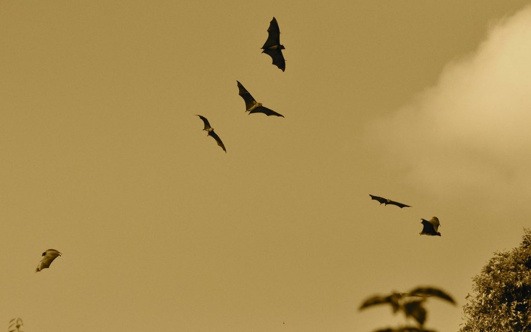 Bat Exclusion: How to Get and Keep Bats Out of Your Home