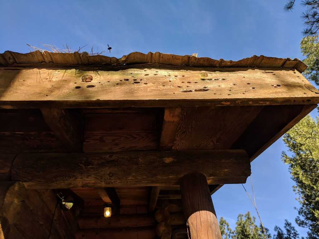 Damage caused by Carpenter Bees